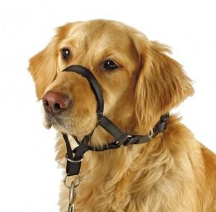 Postroj výcvikový MAXI COACH nylonový pro psy