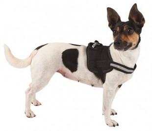 Postroj MAESTRO 1.0 pro psy nylonový