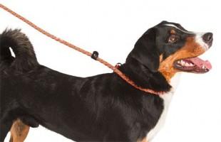 Vodítko MAXI SAFE pro psy s obojkem reflexní