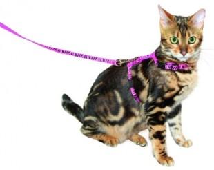 Postroj ZEBRA pro kočku s vodítkem růžový