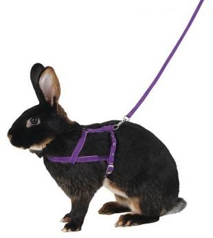 Postroj AGILITY pro králíka s vodítkem