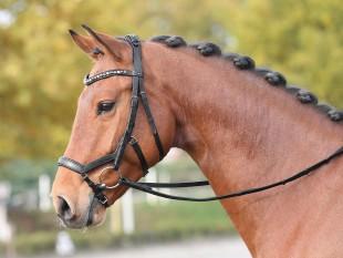 Anatomická uzdečka  pro koně BUSSE Feeling kožená