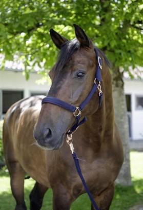 Stájovka pro koně COVALLIERO S/S 2021