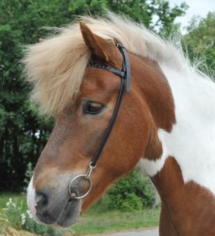 Nátylník HKM s čelenkou pro islandské koně