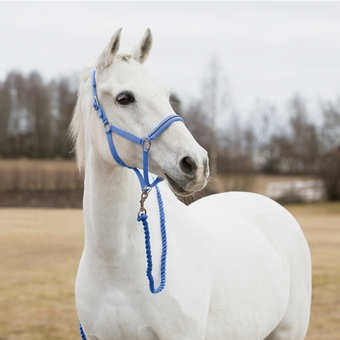 Stájovka HORZE Pony  - 2