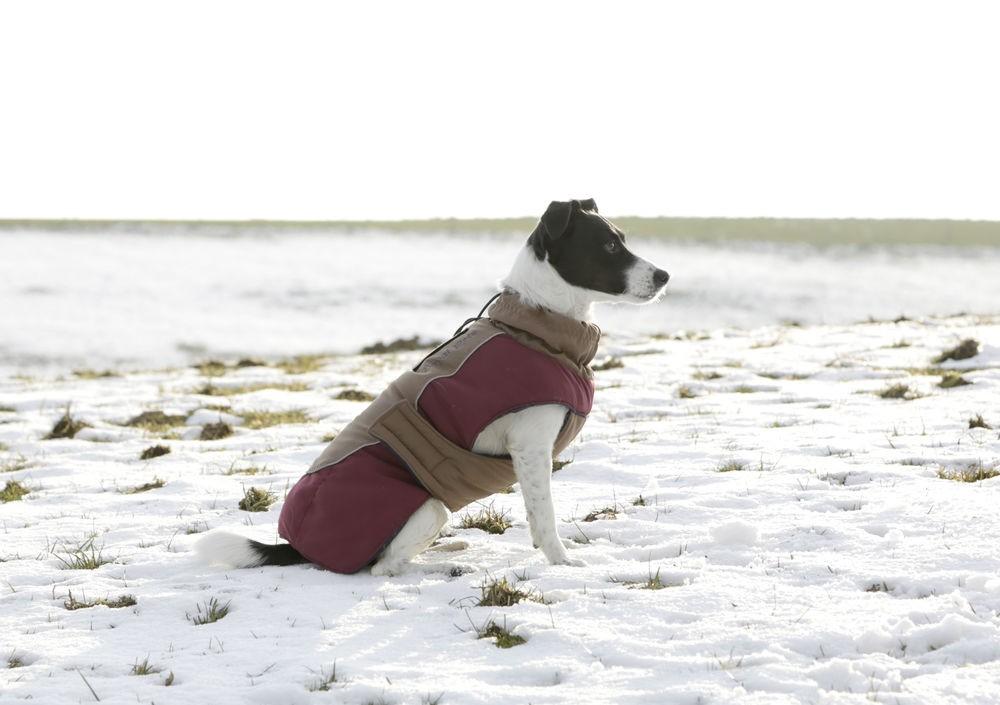 Kabátek ROYAL PETS pro psy XS - 1