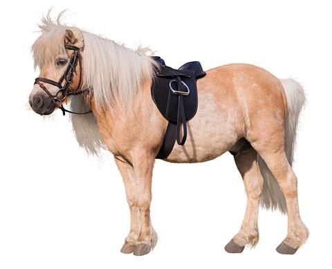 Dětské sedlo Pony Economy set  - 2