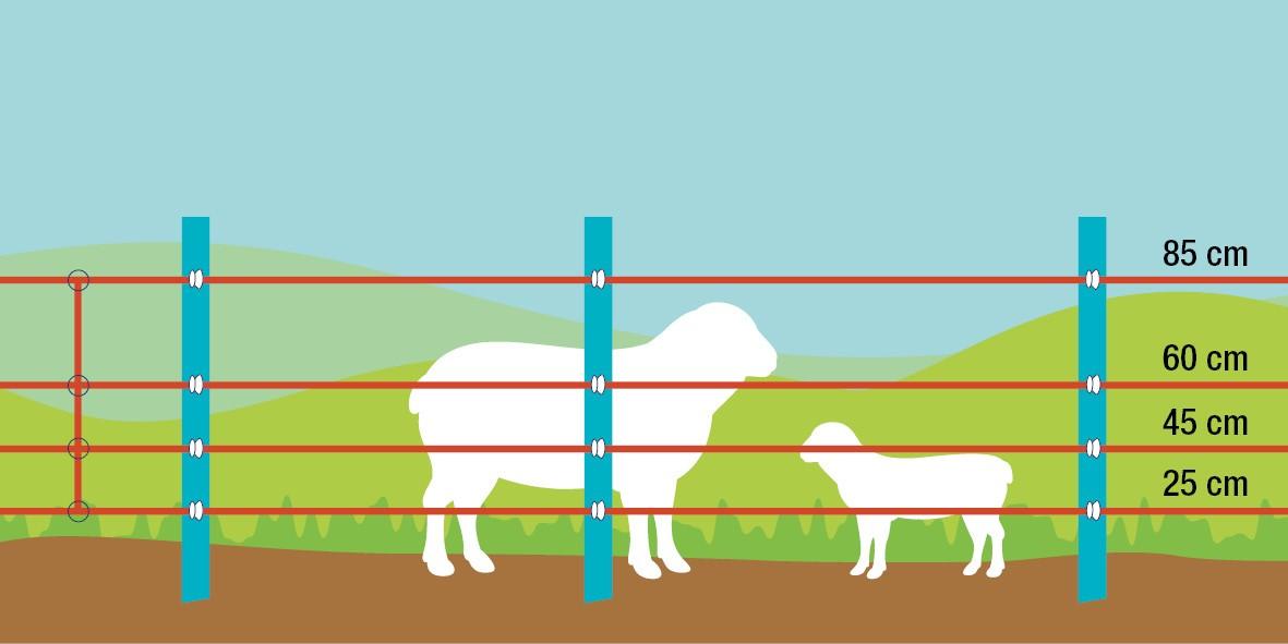 ovce a jehnata